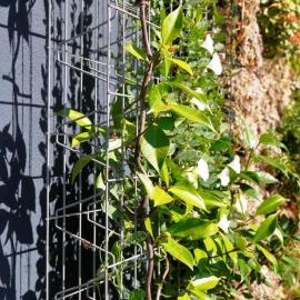 Murs végétaux BIPALIS - Lambert Clôtures